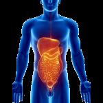 Ikona za trebuh in trebušne organe