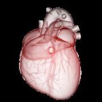 ikona za srce